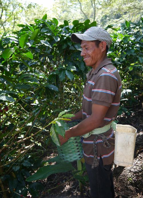 Honduras Reise für Kaffeeliebhaber